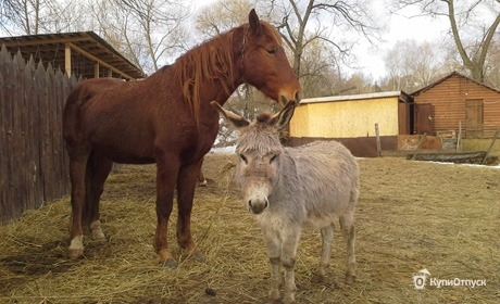 Калужская область, агроферма «Русское подворье»