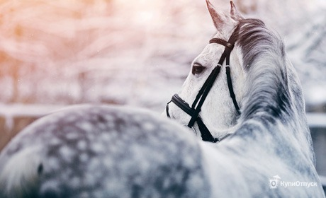 Катание на лошадях для двоих от конного клуба «Авенсис» со скидкой 52%