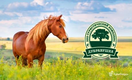 Владимирская обл., экотуристический комплекс «Дубравушка»